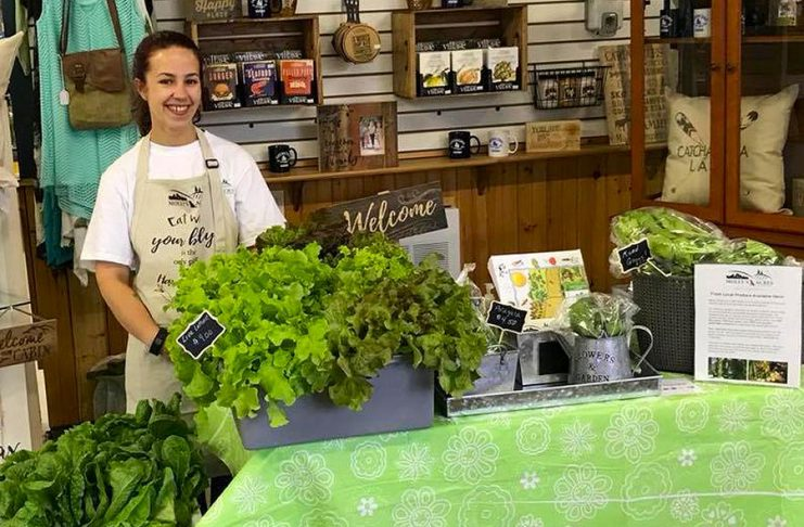 The Lakefield Farmers' Market opens for the season on Thursday, May 24. Molly's Acres, a small family farm near Lakefield that grows a variety of lettuces, herbs, seedlings and other produce, will be joining the market for the first time this year. (Photo: Molly's Acres / Facebook)