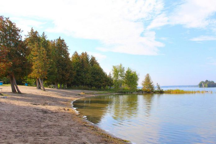 There is no charge this year for day use of the Selwyn Beach Conservation Area, which includes swimming at the unsupervised sandy beach, the use of the boat launch and dock, and the use of hiking trails. There is still a fee for rental of the picnic shelter and for group camping. (Photo: Township of Selwyn)