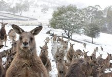This photo of a fictitious kangaroo sanctuary near Millbrook was our top-viewed photo on Instagram in April. It was actually taken by photographer in Tasmania but, given the reaction from many of our readers to our April Fool's Day story, we think a kangaroo sanctuary in the Kawarthas is a winning idea. (Photo: Bernadette Camus, Bonorong Wildlife Sanctuary)