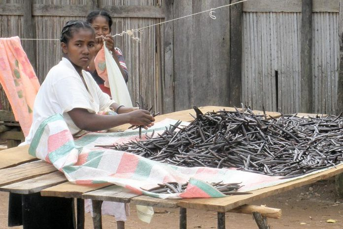 A woman sorting vanilla beans in Sambava, Madagascar. In total, it takes up to 15 months from when the orchid plant flowers to when the vanilla beans are ready for sale. The farmers themselves make pennies on the dollar for their beans.