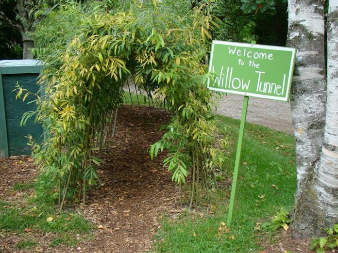 Kids visiting Ecology Park can enjoy the willow tunnel, the cedar maze, and the famous play log. (Photo: GreenUP)