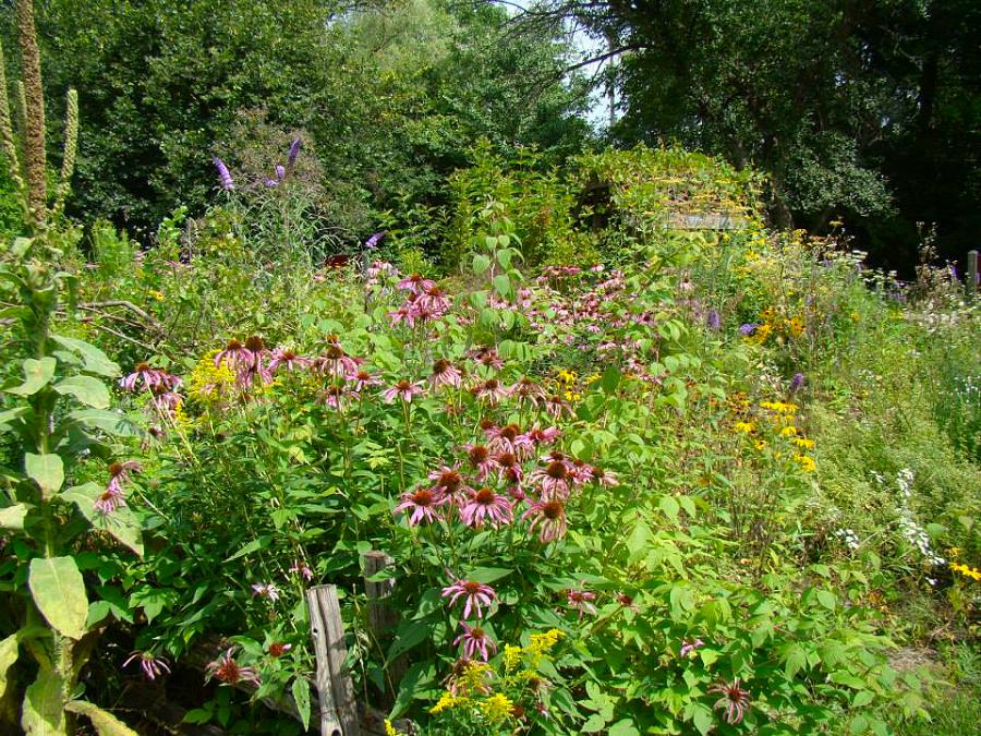 Ecology Park Is An Oasis Of Nature Hidden In The Heart Of