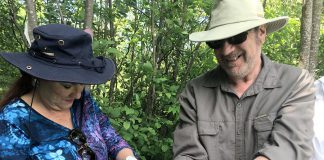 Donors and volunteers from Kawartha Land Trust and the Ontario Turtle Conservation Centre came together on June 15, 2018 to release more than two dozen snappping turtle hatchlings at the Jeffrey-Cowan Forest Preserve along Stoney Lake Trails in North Kawartha. The hatchlings came from eggs recovered from an injured snapping turtle brought to the centre last fall. (Photo: Kawartha Land Trust)