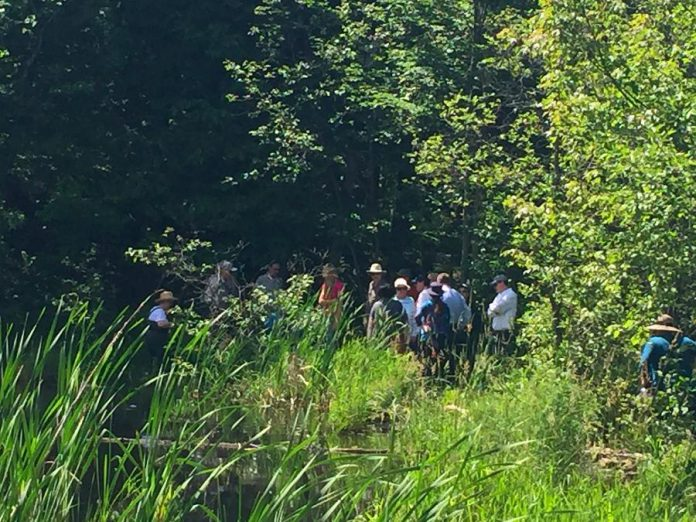 Volunteers hiked down Stony Lake Trails to release the turtle hatchlings. (Photo: Kawartha Land Trust)
