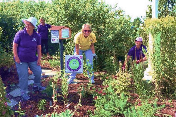 One of the initiatives that makes the Township of Selwyn a Bee City is an initiative that brought together residents and the Lakefield and District Horticultural Society to create a pollinator garden at Isabel Morris Park. (Photo via Bee City Canada)
