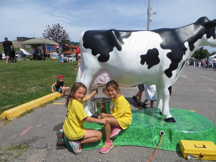 """Maple the Cow"", a life-size milkable cow model featuring milk donated by Kawartha Dairy, is one of the attractions at the 2018 Ennismore Shamrock Festival, which takes place this weekend (July 21 and 22) at the Ennismore Robert E. Young Recreation Complex in Selwyn Township. (Photo: Township of Selwyn)"