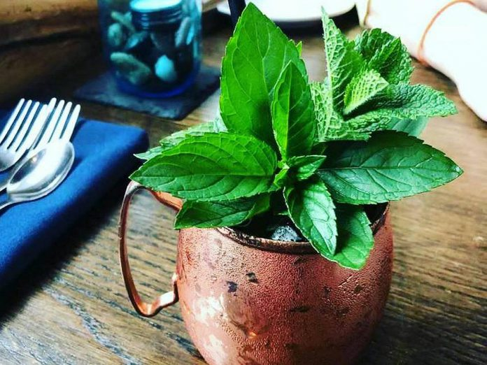 Summer is the season for refreshing cocktails, and local establishments in the Kawarthas offer creative options with seasonal ingredients, such as Lantern Restaurant & Grill's Stony Mule made with local spirits and mint fresh from the garden. (Photo: Lantern Restaurant & Grill)