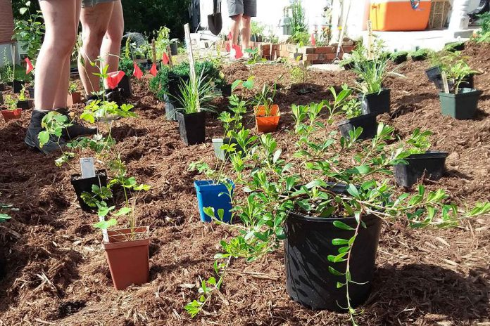 The GreenUP Sustainable Urban Neighbourhoods program is a collaborative initiative that depends on strong partnerships between and among community members and partner organizations. There are many ways to contribute to the wellbeing of your neighbourhood through planning and planting. (Photo: GreenUP)