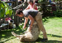 Lang Pioneer Village in Keene is hosting the first-ever Fibrelicious Food & Fibre Arts Festival from August 10-12, 2018. The event features demonstrations including sheep herding and shearing, textiles, rug hooking, hand weaving, and broom making, along with culinary demonstrations include cooking in a dutch oven, ice cream making, baking the perfect pie, and a variety of tasty treats. (Photo: Michael Hurcomb)