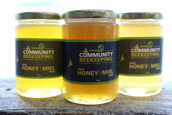 The honey in these jars came from three different hives in the GreenUP Community Beekeeping Program: the Holy Cross hive on the left, the Lift Lock hive in the centre, and the Lock 20 hive on the right. Each has its own unique colour determined by the pollen that the bees in the hive collected at each site.  (Photo: Karen Halley)