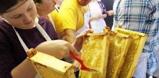 The Holy Cross Bee Club is a teacher-led group of 12 students who steward three hives at Holy Cross Catholic Secondary School in Peterborough. At Myrtle's Kitchen at Peterborough Public Health on September 17, 2018, Holy Cross Bee Club member Emily Berardi uses a comb to uncap the honey cells in trays that were removed from the hives, before the trays are placed in a honey extractor to remove the honey using centrifugal force. Holy Cross Bee Club member Jacob Duda helps to drain honey from the honey extractor into buckets, that will then go through several stages of filtering. (Photo: Karen Halley)
