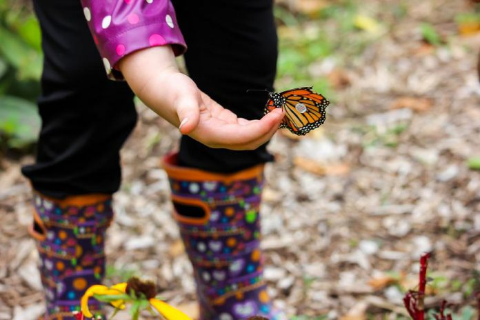 A tagged monarch butterfly at GreenUP Ecology Park. (Photo: Samantha Stephens)