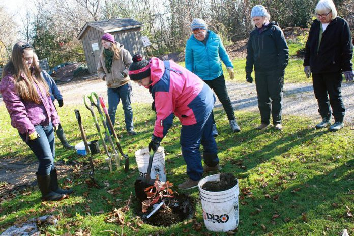 Volunteers plant a tree at GreenUP Ecology Park. The Ecology Park Little Autumn Tree Sale on Saturday, October 13th will feature many native and locally grown trees at the lowest prices of the year to make way for 2019 stock. Fall is the best time to plant a tree as the cool and wet autumn conditions provide optimum conditions for tree roots to establish themselves before winter. (Photo: GreenUP)
