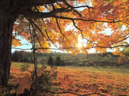Fall is the best time to take a nature hike in Peterborough & the Kawarthas. The bugs are gone, it's cooler, and you'll be surrounded by the brilliant yellows, oranges, and reds of native tress. Make sure to check out Robert Johnston EcoForest Trails in Douro-Dummer Township and, if you're in the City of Peterborough, the popular Jackson Creek Kiwanis Trail.