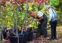Vern Bastable, Manager of GreenUP Ecology Park in Peterborough, helps a customer at the Ecology Park Garden Market select the right tree for her yard. Fall is the best time to plant a tree, when the soil conditions become perfect for tree routes to establish themselves. (Photo: Karen Halley)
