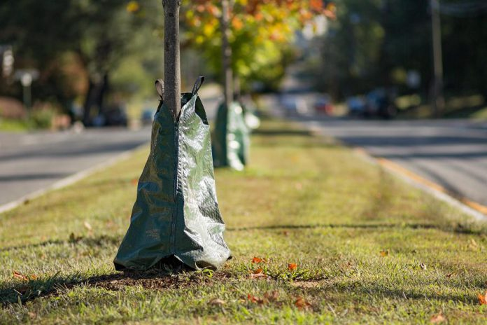 A water bag allows a newly planted tree to receive a slow release of water, providing it with a continuous supply so that roots can establish themselves. Without a tree bag, a newly planted tree should be watered thoroughly twice per week for the first year.