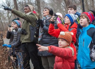 On a single day from December 14th through January 5 each year, tens of thousands of volunteers throughout the Americas take part in the Christmas Bird Count. Wildlife organizations use data collected by citizen scientists in this long-running census to assess the health of bird populations and to help guide conservation action. The Christmas Bird Count is one of several ways you can contribute to real-life science, (Photo: Camilla Cerea / Audubon)