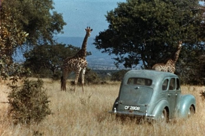 "23-year-old Anne Innis Dagg's car (which she called ""Camelo"") in a South African field in 1956. (Photo: Alexander Matthew)"