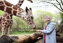 """The Woman Who Loves Giraffes"", a biographical documentary in which Canadian biologist Dr. Anne Innis Dagg re-traces the steps of her groundbreaking 1956 journey to South Africa to study giraffes in the wild, is one of the 70 films screening at the 2019 ReFrame Film Festival in downtown Peterborough. The film will be shown on Saturday, January 26th at Showplace Performance Centre. Dr. Dagg, pictured here feeding giraffes at Chicago's Brookfield Zoo, will be attending the ReFrame screening. (Photo: Elaisa Vargas)"