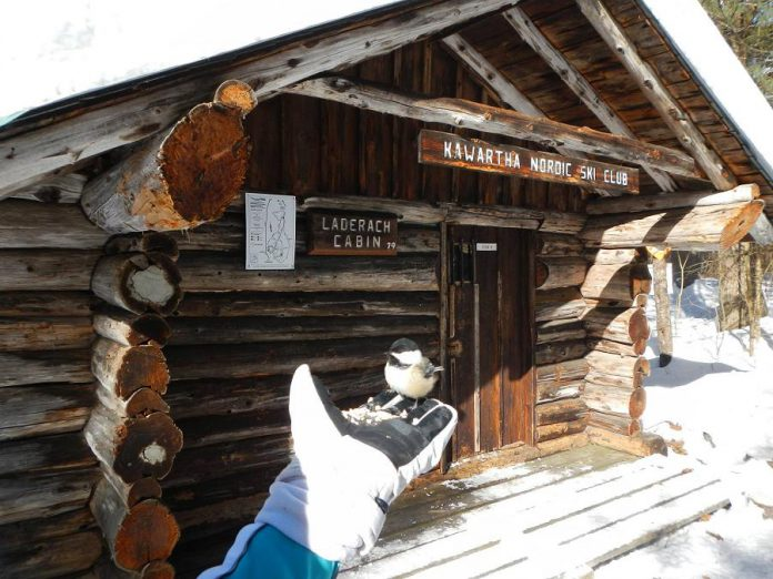Kawartha Nordic Ski Club has a main chalet and four picturesque trail-side cabins equipped with wood stoves and first-aid equipment. Feeding birds out of your hands is optional. (Photo: Kawartha Nordic Ski Club)
