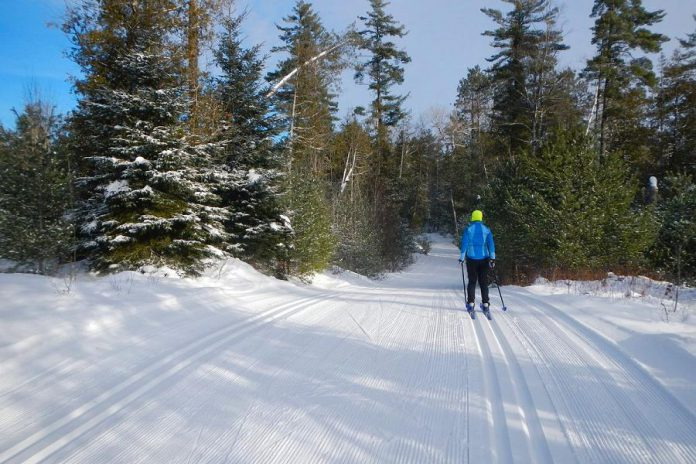 Kawartha Nordic Ski Club offers 46 km of classic skiing trails, 27 km of skate skiing trails, 9 km of snowshoeing trails, and 2 km of lit night skiing trails. (Photo: Kawartha Nordic Ski Club)