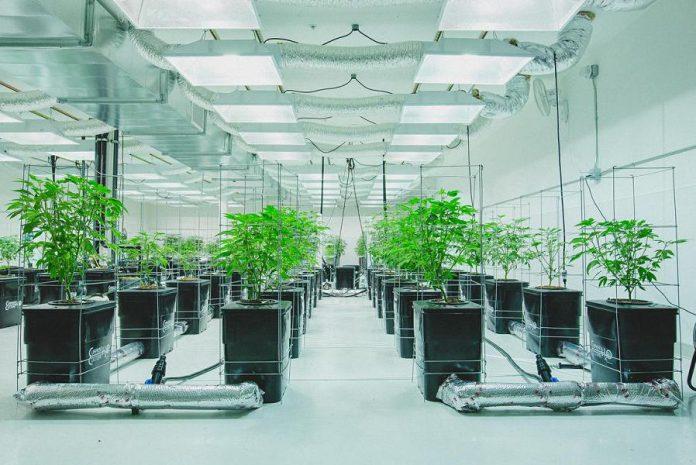 The municipality of Hastings Highlands is partnering with AeroPonLeaf Canada to develop a cannabis production facility to be located north of Bancroft. AeroPonLeaf Canada uses a soil-less growing technique called aeroponics to produce cannabis, a method used by other cannabis producers such as Virginia Company in Spokane, Washington. (Photo: Virginia Company)