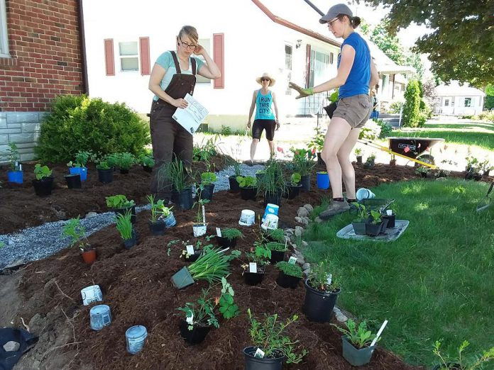 As part of the GreenUP Sustainable Urban Neighbourhoods (SUN) program, this Swanston Street home in Peterborough removed a portion of the lawn to install a rain garden full of native and locally adapted plants. (Photo: GreenUP)