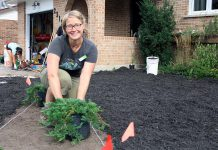 GreenUP's Taylor Wilkes prepares to plant creeping juniper, a drought-tolerant ground cover, at a home in the Kawartha Heights neighbourhood of Peterborough where the conventional lawn was removed in order to install a water-wise garden. (Photo: GreenUP)