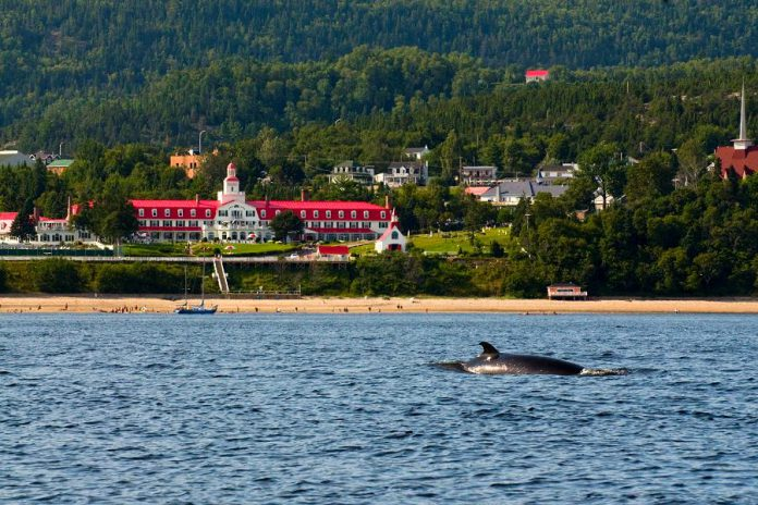 The bohemian town of Tadoussac, where the Saguenay river flows into the St. Lawrence, is perfect feeding ground for the different whale species. Take an excursion on a boat into the St. Lawrence to see these giants up close in their natural habitat. (Photo: Québec Maritime Tourism)