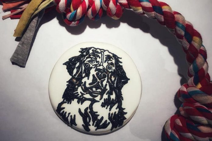Holly Bohnsack of April and August creates cookie art. She recently produced this portrait of a Bernese Mountain Dog. (Photo: April and August)