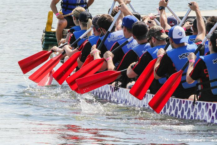 Time is running out to register as a paddler or a team for the 19th annual Peterborough's Dragon Boat Festival, which takes place on June 8, 2019 at Del Crary Park in downtown Peterborough. All proceeds raised by the festival will support breast cancer screening, diagnosis, and treatment at Peterborough Regional Health Centre. (Photo: Linda McIlwain / kawarthaNOW.com)
