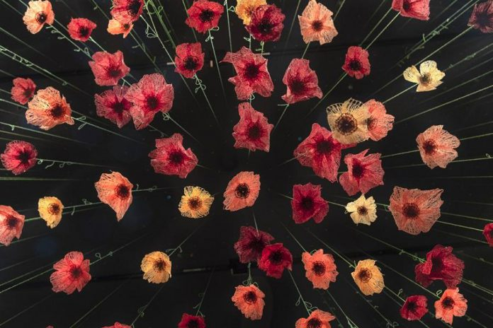 Amanda McCavour's installation 'Memento' features a hanging array of poppies created by machine sewing onto fabric that dissolves in water. The exhibit is on display at Tte Arts and Heritage Centre of Warkworth this July. (Photo courtesy of the artist)