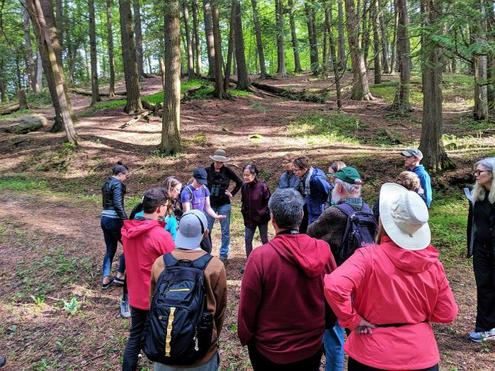 As well as bi-weekly tree identification walks in Jackson Park in the City of Peterborough, AFER is hosting a series of ancient forest walks with Kawartha Land Trust in Peterborough County this summer. (Photo courtesy of AFER)