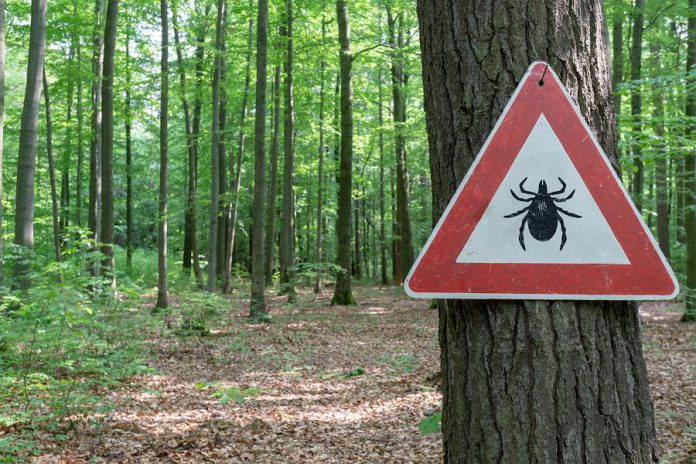 Mostly found in wooded or brushy areas, the blacklegged tick is the only species of tick known to carry Lyme disease. If you encounter a tick, you can upload a photo to the Etick website at www.etick.ca to find out if it's a blacklegged tick. If it is, you can submit it to Peterborough Public Health for testing in case it is infected with the bacteria that causes Lyme disease.