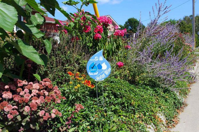 While beautiful drought-tolerant gardens are preferred if your desire is to conserve the maximum amount of water, lawns can actually thrive without copious pesticides, fertilizer, water, and time ... simply by following a few key Water Wise tips.  (Photo: GreenUP)