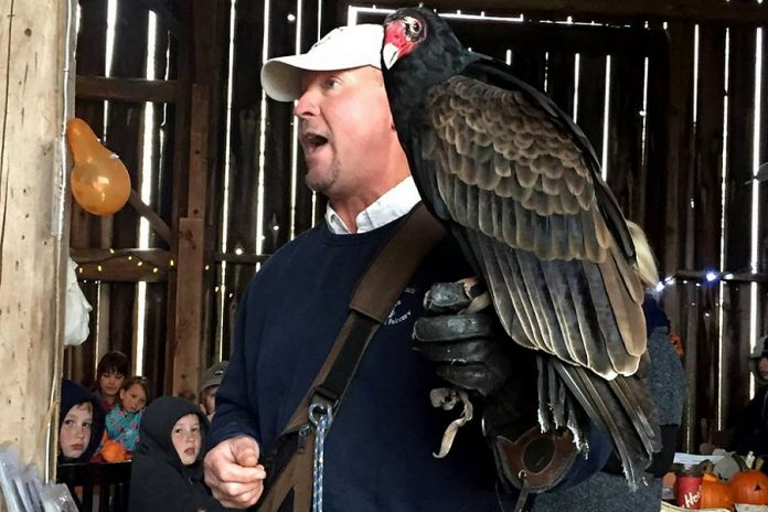 "Master falconer Matt ""The Birdman"" Lieberknecht with a turkey vulture.  (Supplied photo)"