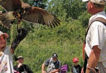 """Birds of Prey"", a two-hour demonstration by master falconer Matt Lieberknecht, takes place at Gamiing Nature Centre on Pigeon Lake on August 10, 2019. Lieberknecht will bring various owls, falcons, kestrels, and other raptors for an interactive show for the whole family, engaging both young and old with his fascinating stories about each bird. (Supplied photo)"