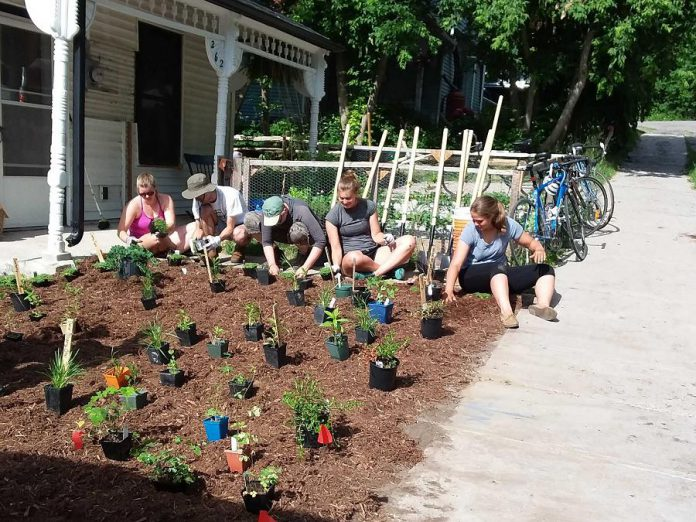 GreenUP's Sustainable Urban Neighbourhood (SUN) program relies on volunteers who help accomplish the program's ambitious sustainable landscaping goals. You can learn about, and participate in,  sustainable landscaping at several events during September. (Photo: GreenUP)
