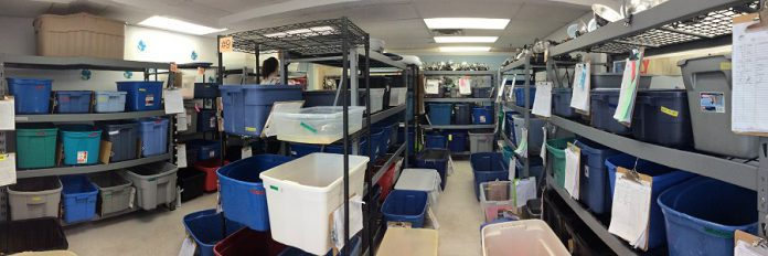 A 1,000-square-foot intensive care unit room at the Ontario Turtle Conservation Centre in Peterborough made possible in 2018 thanks to a bequest by Gail Grace Christie. In 2018, the centre admitted a total of 945 turtles. So far in 2019, only halfway through turtle season, the centre has already admitted more than 1,100 turtles.  (Photo: Ontario Turtle Conservation Centre)
