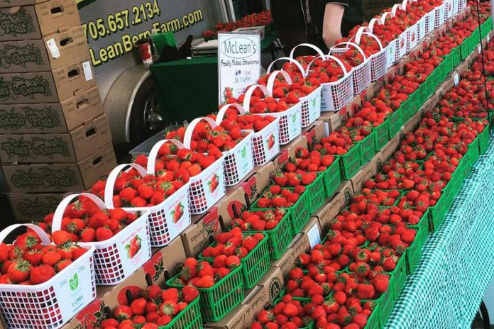 McLean Berry Farm in Lakefield is a member of the  Berry Growers of Ontario, in which the federal and provincial governments has invested more than  $134,000 in funding.  (Photo: McLean Berry Farm / Facebook)