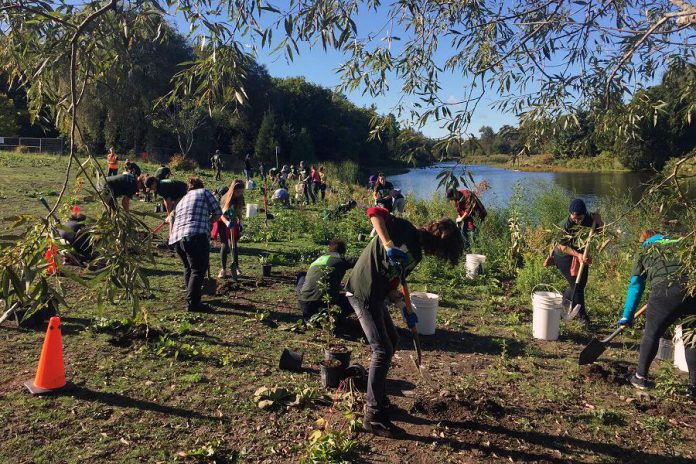 More than 50 volunteers, including TD Canada Trust employees and their families, planted 250 native trees and shrubs in Millbrook as part of the TD Tree Days initiative. (Photo courtesy of Otonabee Conservation)