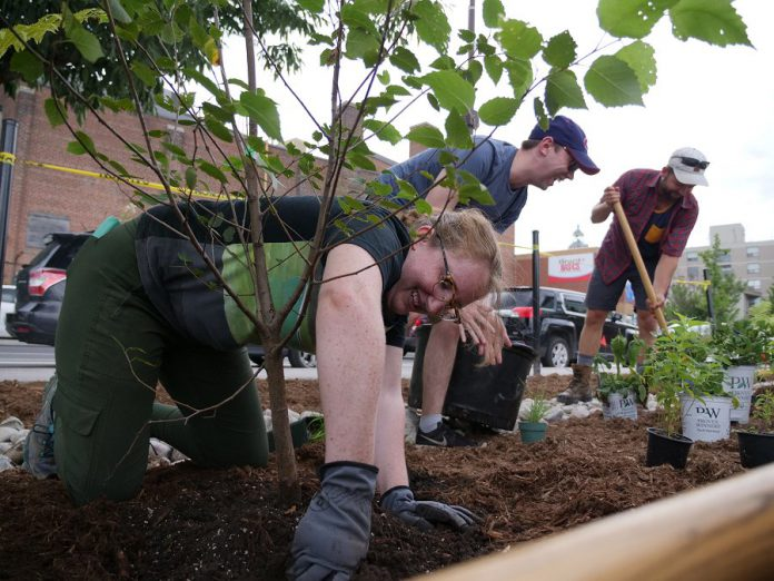 On a beautiful midsummer's evening, the GreenUP Depave Paradise team joined forces with local residents, families, and members of the Alderville Black Oak Savanna to transform a paved area outside Euphoria Wellness Spa in downtown Peterborough into a rain garden. (Photo courtesy of GreenUP)