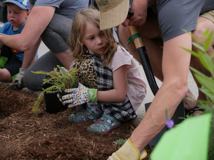 Volunteers of all ages got involved with the GreenUP Depave Paradise project, creating shared memories and a shared community green space outside Euphoria Wellness Spa in downtown Peterborough. (Photo courtesy of GreenUP)