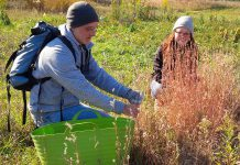 If you want to connect with nature and help protect natural spaces, Kawartha Land Trust is looking for volunteers for several land stewardship activities this fall, including an October 5th event on the McKim-Garsonnin Property in Pontypool where volunteers will help staff pick the seeds of an endangered ecosystem to help in the future replanting of the grasses and wildflowers of our native prairies. (Photo courtesy of Kawartha Land Trust)