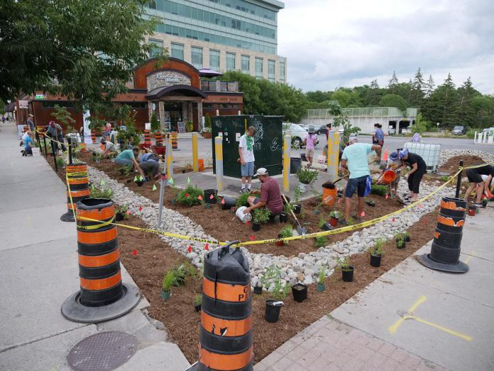 "Volunteers depaved and planted the Jiimaan'ndewemgadnong pocket park site, located outside of Euphoria Wellness Spa in downtown Peterborough, over the summer of 2019. Later this fall, the pocket park will be completed with the addition of a canoe art installation designed by local Anishinaabe artist Tia Cavanagh. Jiimaan'ndewemgadnong is a Mizi-Zaagiing Anishinaabeg phrase meaning ""the place where the heart of the canoe beats"". (Photo courtesy of GreenUP)"