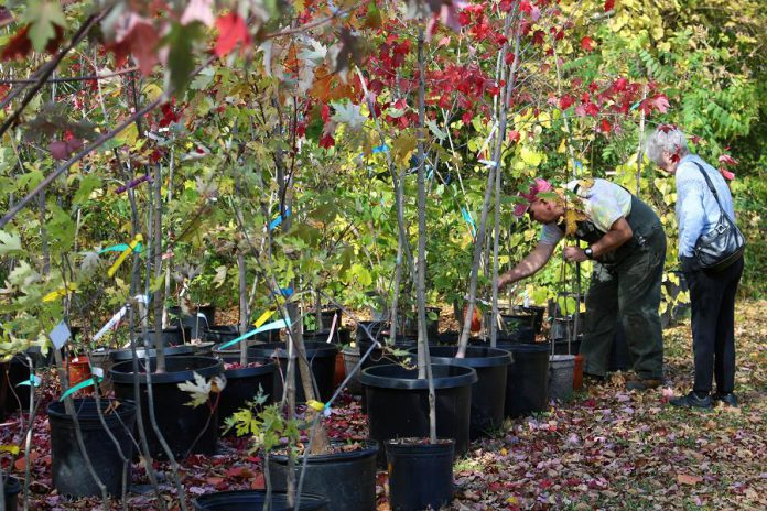 Fall is the best time to plant a tree, as the soil conditions become perfect for tree roots to establish themselves.  Ecology Park manager Vern Bastable is happy to offer advice on choosing the right tree, tree planting, and general tree care.  GreenUP's annual autumn tree sale takes place at Ecology Park from 10 a.m. to 4 p.m. on Saturday, October 5th. (Photo: Karen Halley)