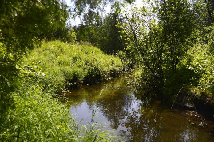 The streams and creeks in Fleetwood Creek watershed are one of the best opportunities in the Kawarthas to improve habitat quality of cold water streams for species like Brook trout.  (Photo courtesy of Kawartha Land Trust)