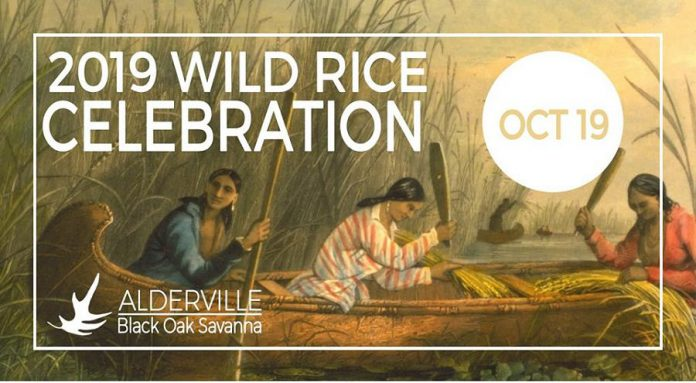 The Alderville Black Oak Savanna is hosting a Wild Rice Celebration On October 19. 2019. (Graphic courtesy of Alderville Black Oak Savannah)