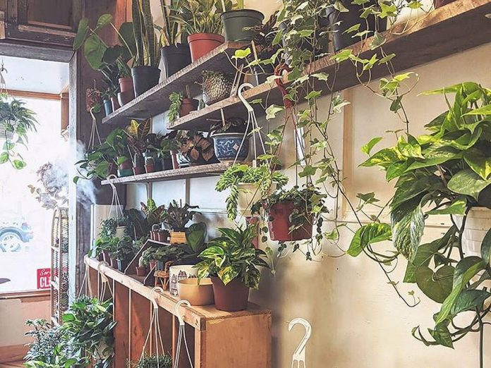 Plant Goals is a new garden shop owned and operated by Désirée Fawn in downtown Peterborough. (Photo: Plant Goals / Facebook)