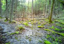 Hans and Christine Keppler plan to donate their 295-acre property, located in North Kawartha township near Chandos Lake, to Kawartha Land Trust to ensure it is cared for in perpetuity. Along with numerous vernal pools (pictured) that provide critical habitat for species at risk, the new Keppler Nature Sanctuary contains wetland, mixed canopy forest, and permanent streams. More than 40 species of birds, including an an active heronry, have been observed on the property. (Photo courtesy of Kawartha Land Trust)
